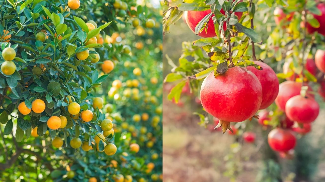 חקלאות בקיבוץ להב – חקלאות ישראלית בשנת 2020