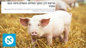הארץ | למה חוש הריח חזק במיוחד אצל חזירים? | קיבוץ להב